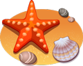 starfish-shells